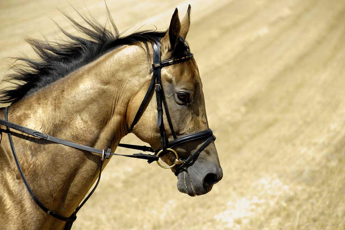TurkmenistanTitel Horsefolkmagazin