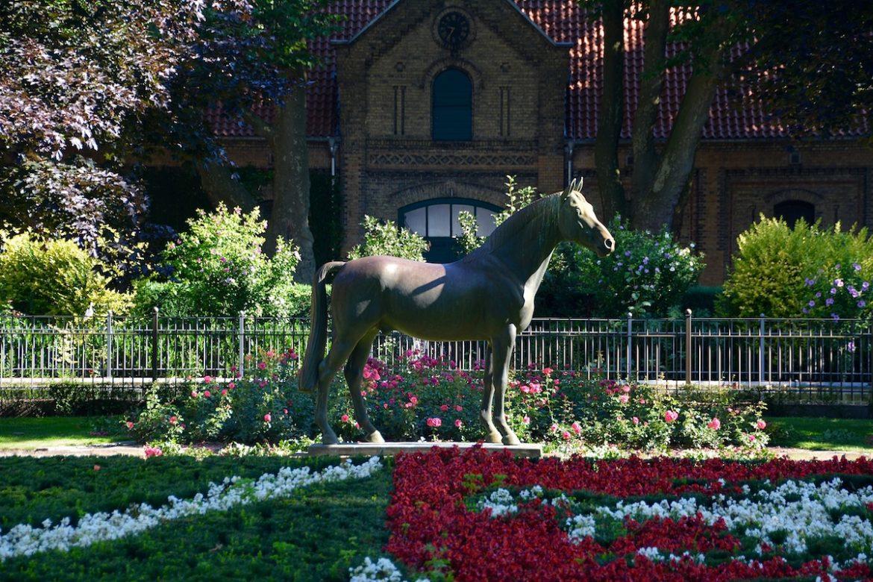 Stadt der Pferde