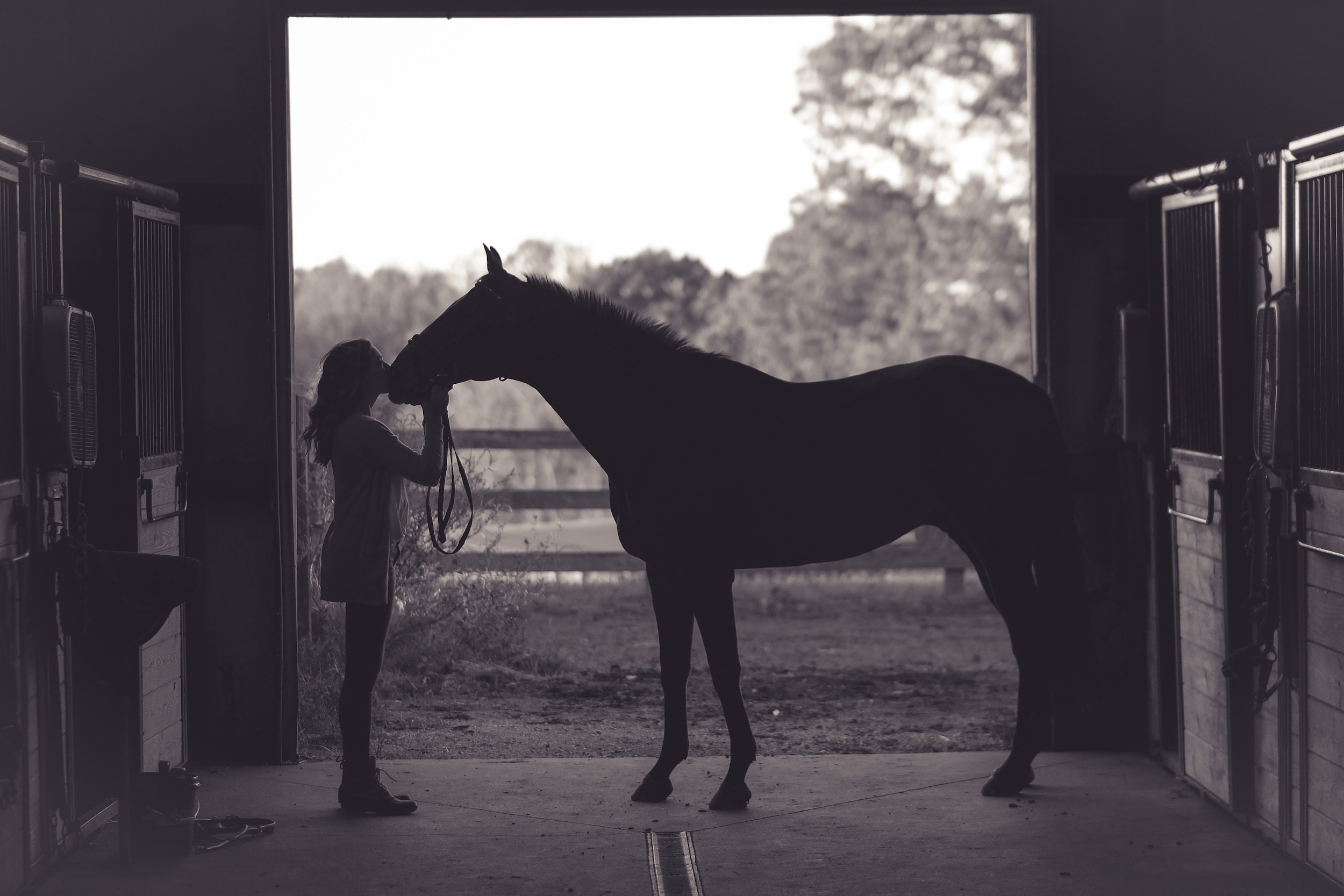 pferd, gelände, ausreiten