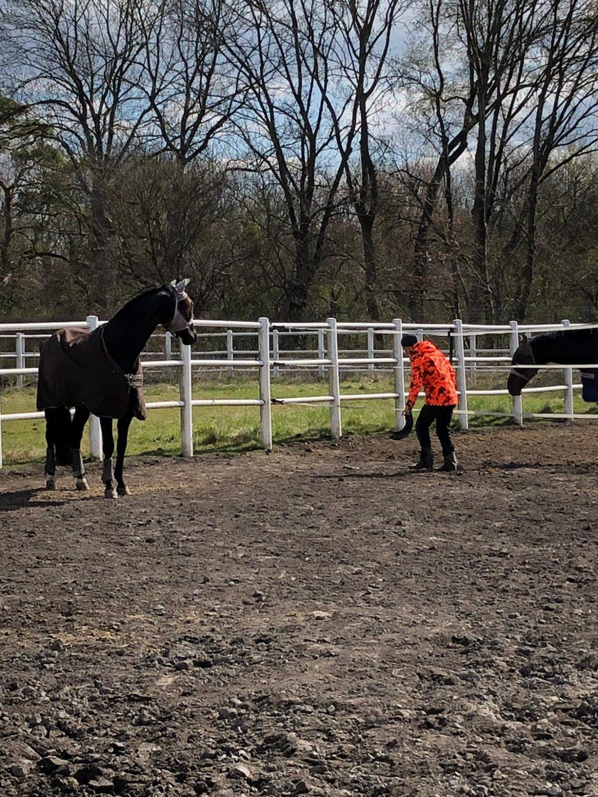 Grüße aus dem Pferdestall